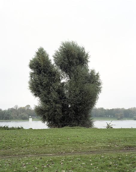 Foto eines Baumes im Jugendpark, Köln. Das Foto ist Teil des Projektes -Vollendete Gegenwart- des Kölner Fotografen Marcel Wurm.