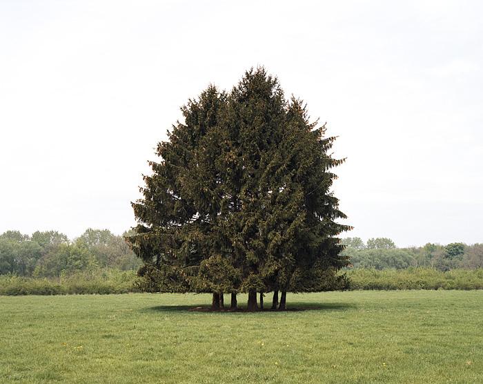 Foto einer Gruppe von Fichten auf freiem Feld. Fotogafie für das Projekt Baumgruppe von Fotograf Marcel Wurm aus Köln. Ein Projekt zur Neuorientierung seiner fotografischen Arbeit. Eine Art Zen Mediation über ein ganzes Jahr.